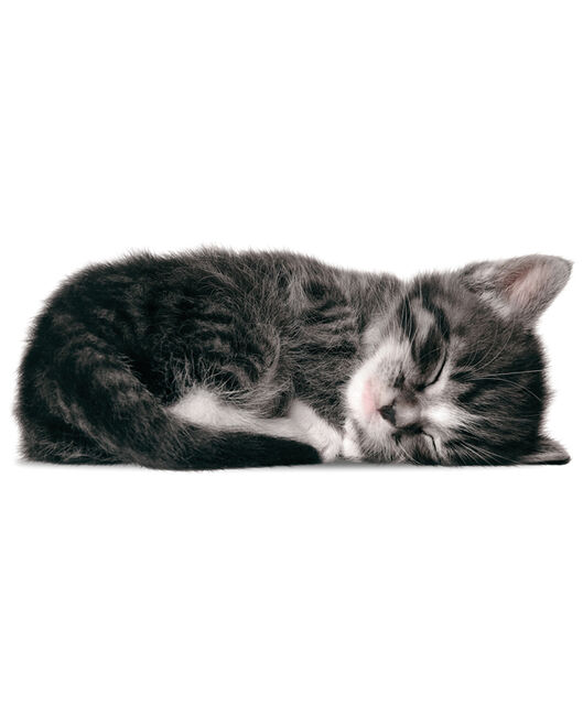 KEK sticker kitten Sam - Geen Kleurcode